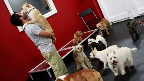Pet Parents, aka Big Spenders | Dogs | Scoop.it