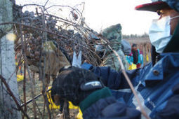 Frozen harvest: Cold concentrates sweetness of Ice Wine grapes - Sauk Prairie Eagle | Love Your (Unstuffy) Wine | Scoop.it