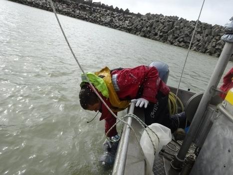 Surveillance écologique du milieu marin par l'IFREMER : un partenariat pour une gestion durable de la mer | Ifremer | Scoop.it