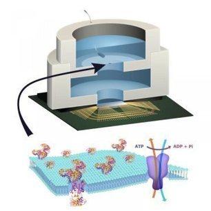Δημιουργήθηκε το πρώτο «βιολογικό» τσιπ υπολογιστή | omnia mea mecum fero | Scoop.it