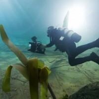 How To Fake An Underwater Scene In A Pool   ScubaObsessed   Scoop.it
