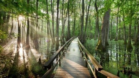 Happy World Wetlands Day | Sustainable Futures | Scoop.it