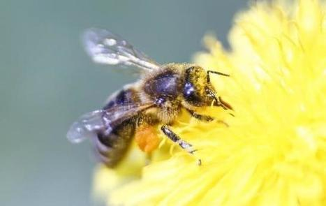 U.S. court finds EPA was wrong to approve Dow pesticide harmful to bees | Food issues | Scoop.it