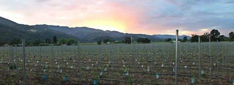 California Vines Age Prematurely | Wine News & Features | Grande Passione | Scoop.it