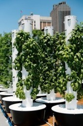 Roof Top Gardens And Public Spaces | Daily Gardening Resource ... | Vertical Farm - Food Factory | Scoop.it