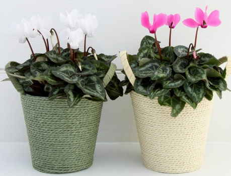 Techniques to Grow various Flowering Plants | Plants Online | Scoop.it