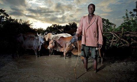 Ethiopia's farmers fight devastating drought with land restoration @Investorseurope | Africa : Commodity Bridgehead to Asia | Scoop.it