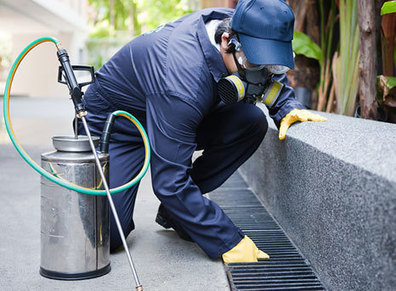 Pest Control Northern Beaches, Ian King Local Pest Control | Boost SERP ranking | Scoop.it