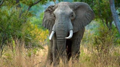 Elephants in tropical forst and their rain connection: Value of biodiversity | Oven Fresh | Scoop.it