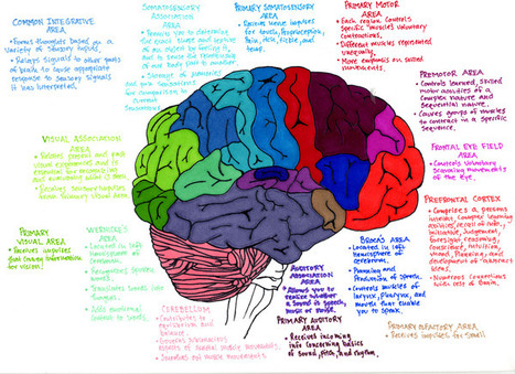 Boost your creativity by effectively using mind mapping [video] | Healthy Living, Happy Living | Scoop.it