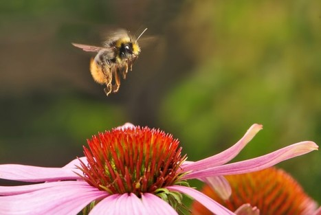 The World's Most Popular Insecticides Are Messing With Bees | Health from the Hive | Scoop.it