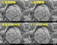 """New Electron Microscope Enables to Observe 3D Image in """"Real Time"""" 