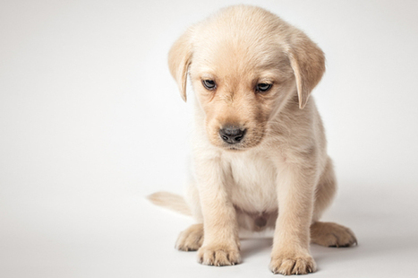 Do our pets need Prozac? Are we making them feel better, or ourselves?   Animal rights   Scoop.it