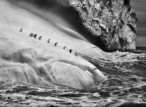 Sebastião Salgado images of unspoiled nature in 'Genesis' | It should have been me to take that photography | Scoop.it