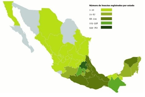 Catálogo de insectos comestibles en México | | Entomophagy: Edible Insects and the Future of Food | Scoop.it