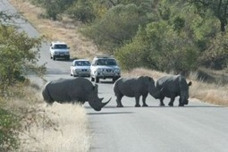 Ever heard of Kruger national park | informations on tourism in africa | Scoop.it