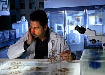 H.M.'s Brain Yields New Evidence | Neuroscience News Research Articles | Neuroscience Social Network | Social Neuroscience Advances | Scoop.it