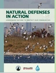 Defensas naturales en acción: El uso de la naturaleza para proteger nuestras comunidades | Ordenación del Territorio | Scoop.it