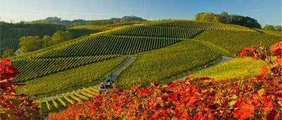 Lombardy's agriculture data by INEA, 2013 edition: PGI & IGT vineyard areas were 17,497 ha's in 2012 | WineLex Italy | Scoop.it