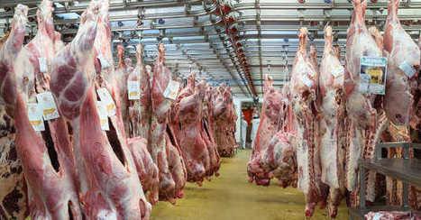 Castel Viandes : mise en examen pour tromperie aggravée - Agro Media | Actualité de l'Industrie Agroalimentaire | agro-media.fr | Scoop.it