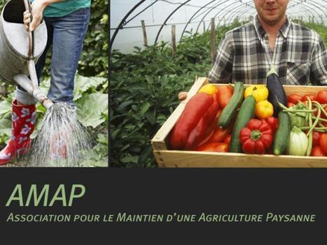 Peut-on faire confiance aux AMAP ? | agro-media.fr | Actualité de l'Industrie Agroalimentaire | agro-media.fr | Scoop.it