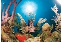 Tips to Fight the Spread of Lionfish   All about water, the oceans, environmental issues   Scoop.it