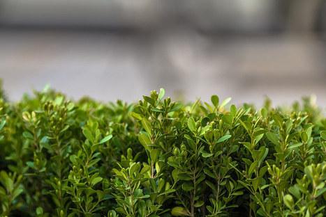 Debating the degrowth alternative | P2P Foundation | Peer2Politics | Scoop.it