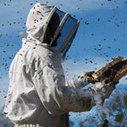 Agriculture : Bras de fer autour des abeilles | Bio alimentation | Scoop.it
