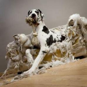 MON CHIEN DETRUIT TOUT : pourquoi, et comment y remédier ? - Z comme Zoo | Animalerie en ligne | Scoop.it