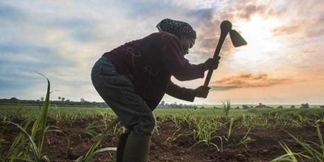 La RSE est un levier de performance pour les entreprises agro-industrielles | Questions de développement ... | Scoop.it