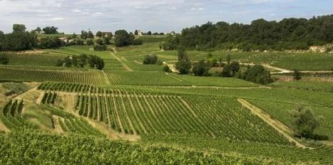 Vins de Bordeaux: 3 coopératives fusionnent à Saint-Emilion | Le vin quotidien | Scoop.it