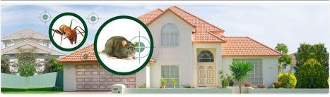شركة مكافحة حشرات بالرياض - 0559200924 مع الضمان ركن نجد | شركة تنظيف - نقل أثاث - رش مبيدات | Scoop.it