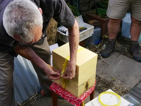 Urban Stingless Beehive: harvesting and splitting   Vertical Farm - Food Factory   Scoop.it