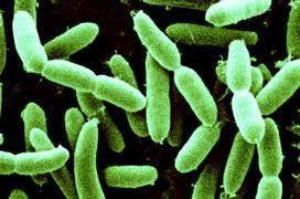 Certains probiotiques pourraient aider les femmes à perdre du poids. 2014/03/03> BE Canada432> | La vie , la santé en microscopie électronique | Scoop.it