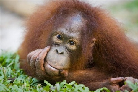 Giant palm oil trader commits to ending deforestation | Greenpeace UK | Silviculture and Forest News | Scoop.it