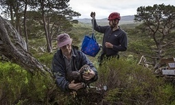 Golden eagles survey takes flight in Scotland – in pictures | GarryRogers NatCon News | Scoop.it