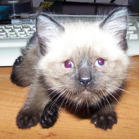 Pretzel the Kitten is Blind, Deformed and Inspiring People on Facebook | Dagenais News Network | Scoop.it