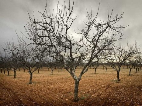 Why You MUST Plant Fruit & Nut Trees Now! | survivalists and preppers | Scoop.it