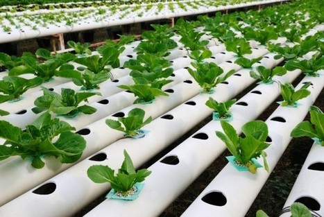 Moving on Up with Vertical Farming | Vertical Farm - Food Factory | Scoop.it