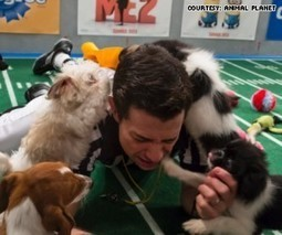 Super Bowl Sunday: From celebs to puppies! - HLNtv.com | albert elsey | Scoop.it
