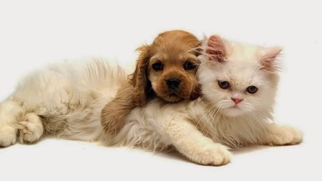Mount Pleasant Veterinary Hospital - Tips to Feed Your Cat   Mount Pleasant Vet   Scoop.it