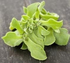 Ficoïde glaciale | Jardinage bio | Scoop.it
