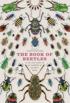 A Field Guide to the Strange and Surprising World of Beetles | WIRED | Rainforest EXPLORER:  News & Notes | Scoop.it