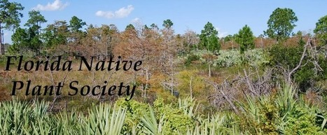 Florida Native Plant Society Blog: Plant Profile: Opuntia stricta (Shell ... | Native Plants | Scoop.it