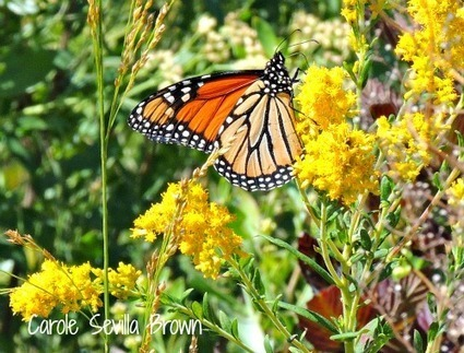 Triangle Point Butterfly Garden, Cape May | Annie Haven | Haven Brand | Scoop.it