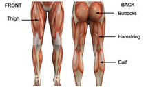 Leg Exercises – Thigh, Hamstring & Glute Exercises | WorkoutBOX | Blog Research | Scoop.it