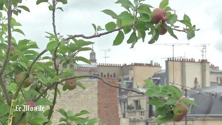 Agriculture urbaine : l'avenir est sur les toits | Territoires apprenants, sciences participatives, partages de savoirs | Scoop.it