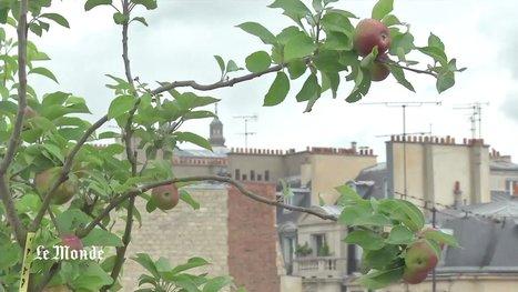 Agriculture urbaine : l'avenir est sur les toits | Nature en Ville | Scoop.it