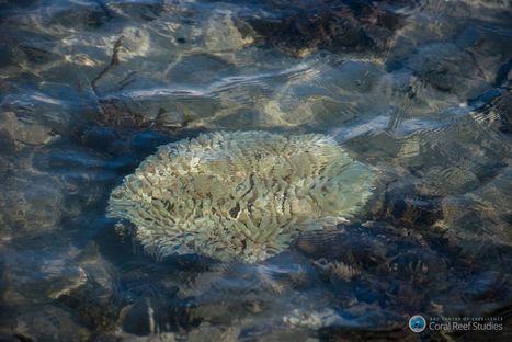 Tara Pacific : la plus vaste étude des récifs coralliens débute demain | Planete DDurable | Scoop.it