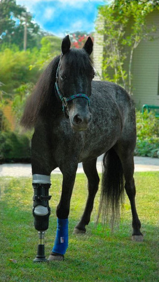 Meet Molly - She's a gray speckled pony who was abandoned by her owners when Katrina hit southern Louisiana | Spontaneous Smiley | Scoop.it